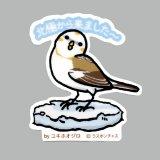 【野鳥生活】防水UVステッカー「北極から来ました〜」送料180円