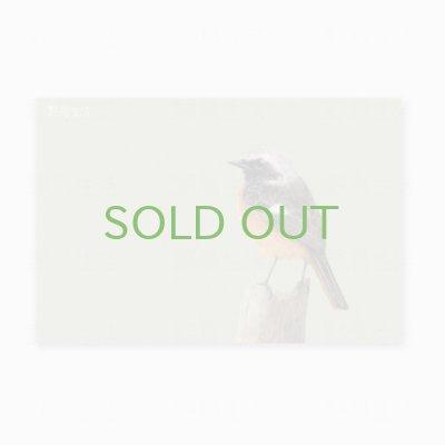 画像1: 【野鳥生活】色鉛筆画ポストカード「ジョウビタキ01」送料180円