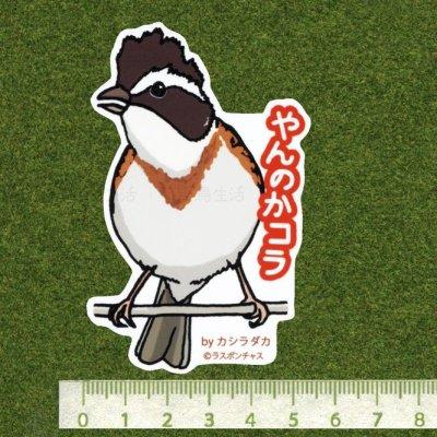 画像2: 【野鳥生活】防水UVステッカー「やんのかコラ」送料180円