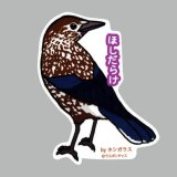 【野鳥生活】防水UVステッカー「ほしだらけ」送料180円