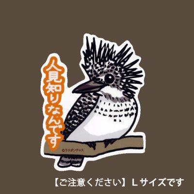 画像1: 【野鳥生活】防水UVステッカー・Lサイズ07「ヤマセミ01」送料180円