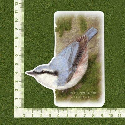 画像2: 【野鳥生活】防水UVステッカー「ゴジュウカラ01」送料180円