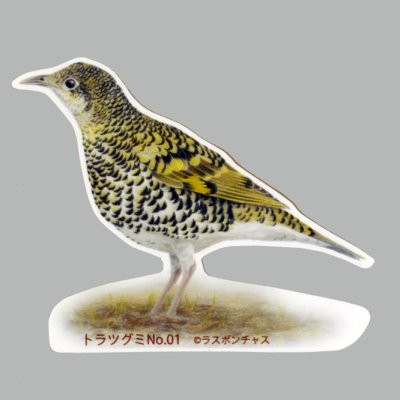 画像1: 【野鳥生活】防水UVステッカー「トラツグミ01」送料180円