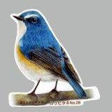【野鳥生活】防水UVステッカー「ルリビタキ08」送料180円
