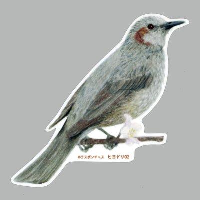 画像1: 【野鳥生活】防水UVステッカー「ヒヨドリ02」送料180円