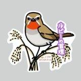 【野鳥生活】防水UVステッカー「ルビーの首環」送料180円