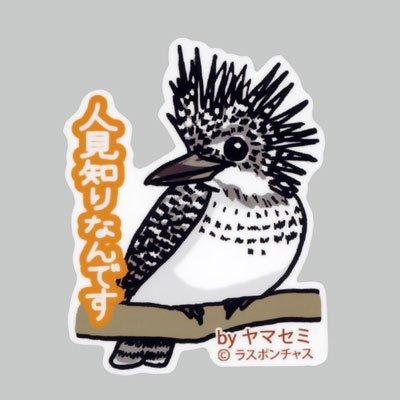 画像1: 【野鳥生活】防水UVステッカー「人見知りなんです」送料180円